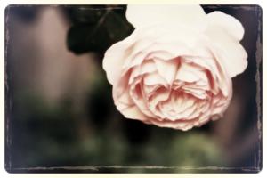 Garden of delight photograph by Corey Amaro
