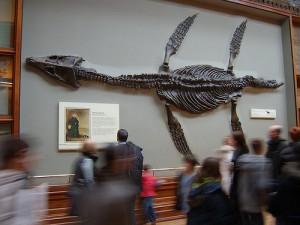 Plesiosaur-mary anning
