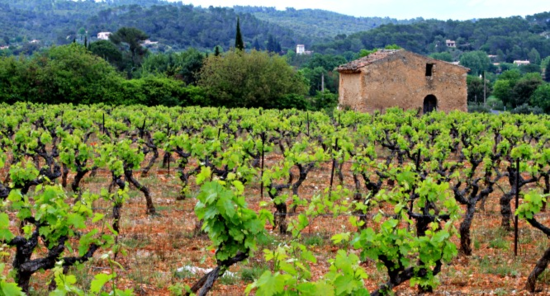French living, provence, corey amaro photography Vineyards in Provence