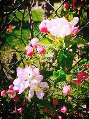 Privencal Spring