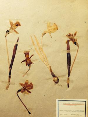Herbiers 1900s