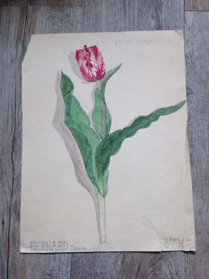 Single Tulip Watercolor