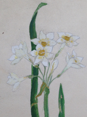 Narcisse Watercolor