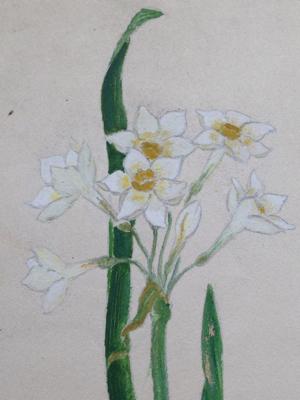 Narcisse Watercolor