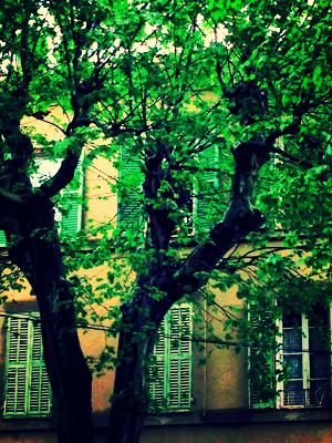 Provence spring corey amaro