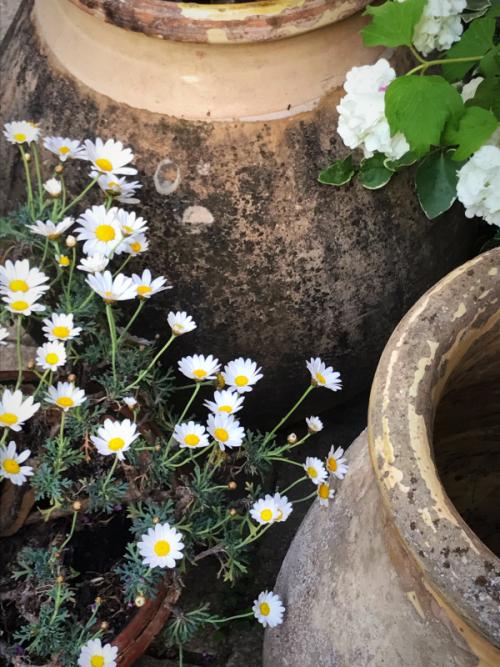 French olive pots, antique provencal pots, our garden