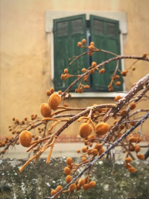 Aix en Provence Walk about