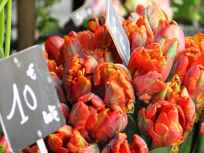 French flower market tulips corey amaro tongue in cheek blog