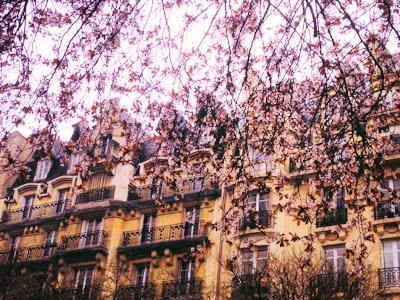 Flowers in Paris