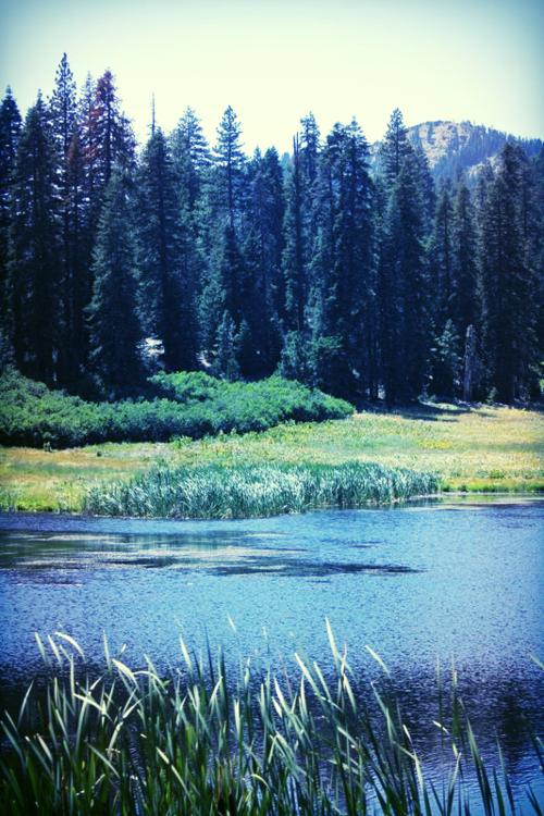 plaskette meadow
