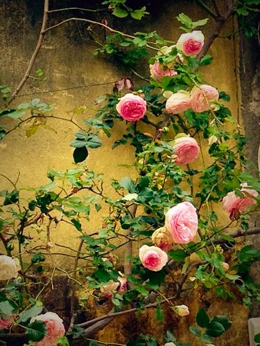 Flowers blooming corey amaro
