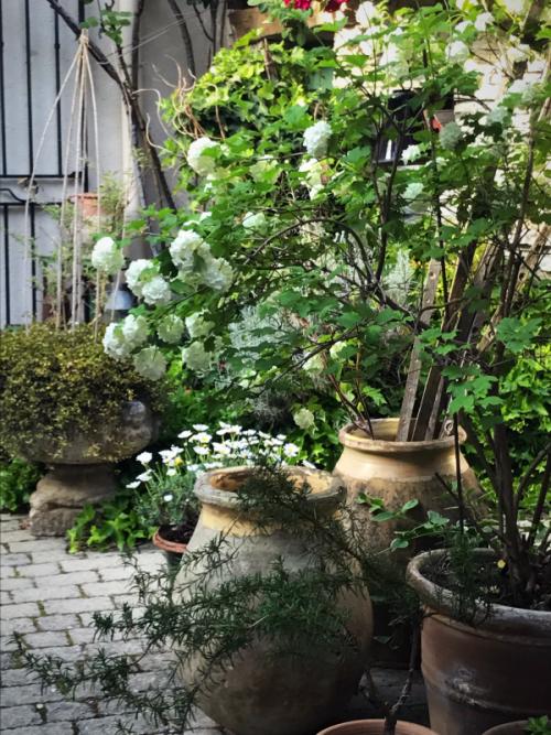 Provencal garden, France, our garden in Spring