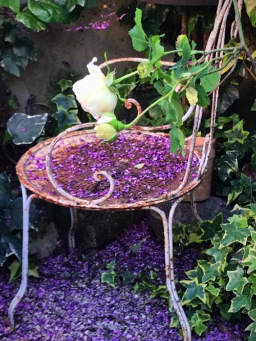 Judas tree petal, antique garden chair, Provencal garden,