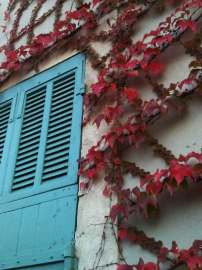 Autumn vine France