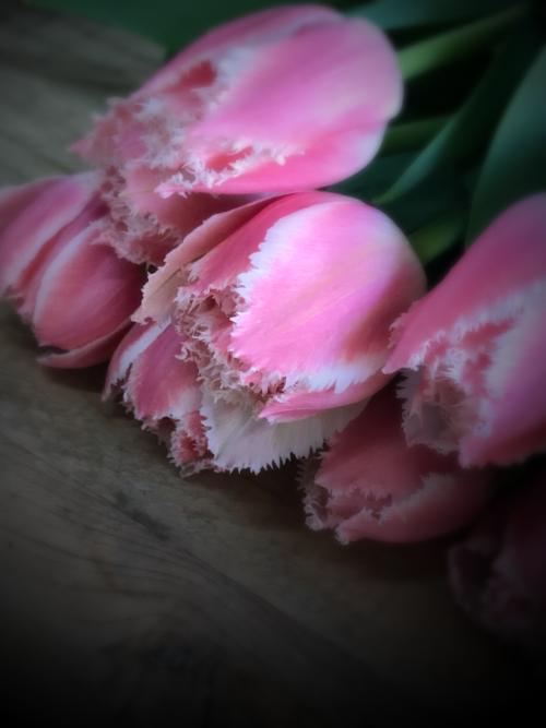 pink tulips, corey amaro
