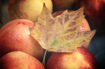 a gift of autumn corey amaro France