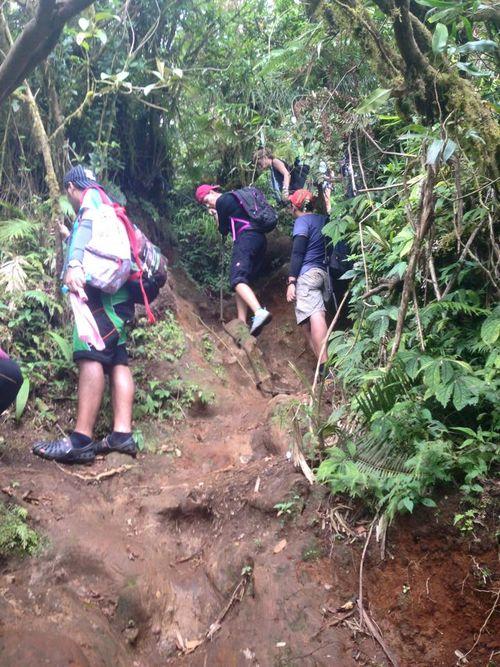Rain forest chelsea