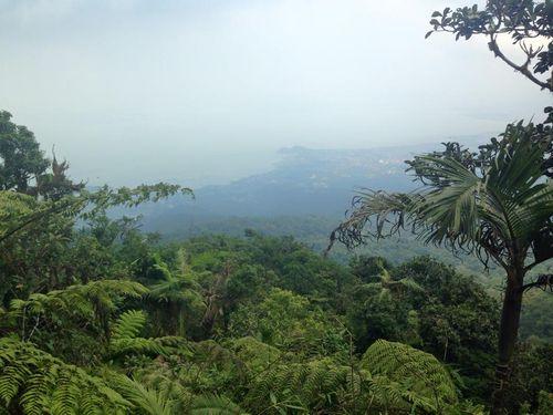 Rain forest philippines
