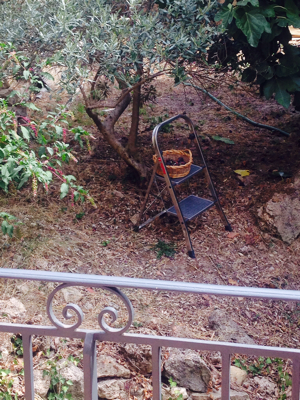 Late Summer in Provence
