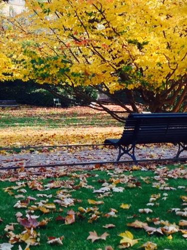 Paris, gold leaves, autumn, Corey Amaro