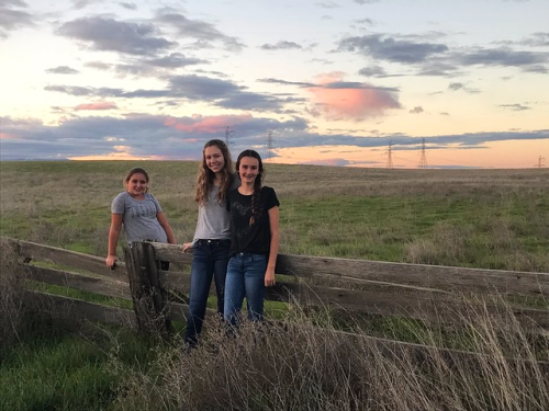 the back roads, willows, nieces, corey amaro