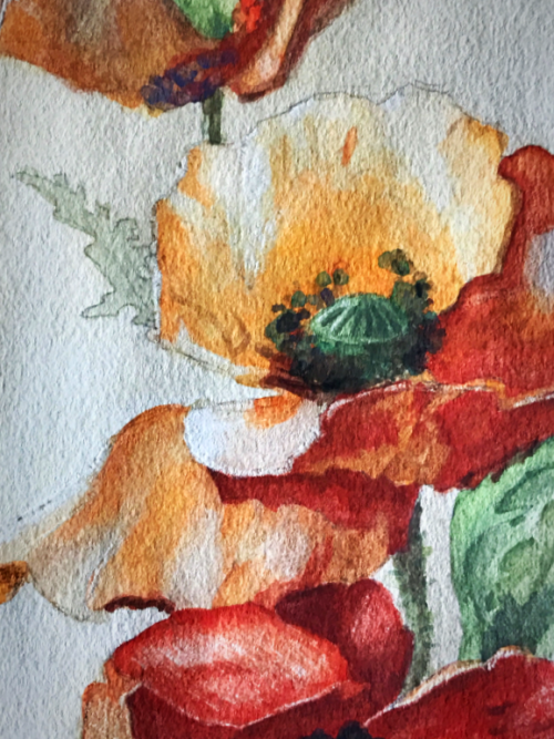 Colors of provence, poppies, Corey Amaro, Paintings brocante