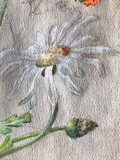 daisy in French Marguerite, Corey AMARO brocante