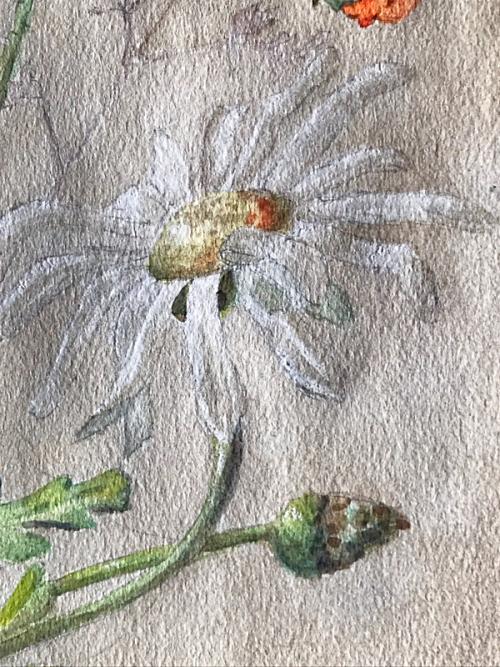 daisy in French Marguerite, Corey AMARO brocante