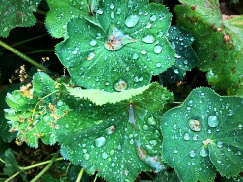 morning rain drops