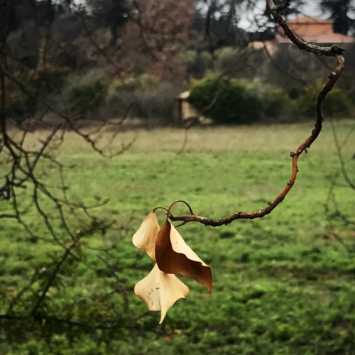 French Countryside, daily walk, corey amaro