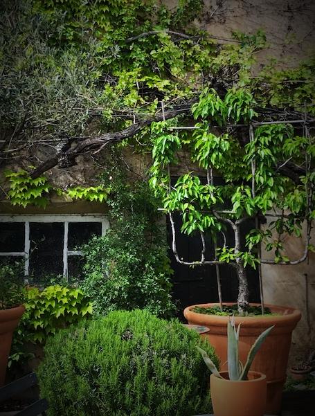 Provence corey amaro ravel