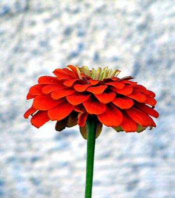 Together we bloom