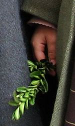 Palm_sunday_in_france_3