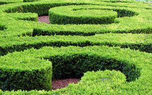 Hedgegrow