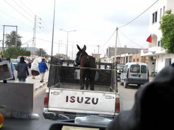 Donkeyinthebackofapic