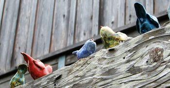 Birds_on_a_fence