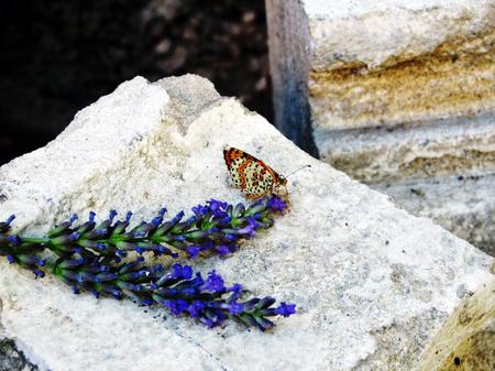 Butterflyonarock_2