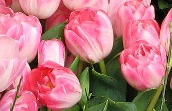 Tulips_5